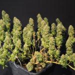 Πως να έχουμε τη μέγιστη απόδοση από ένα φυτό