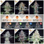 Nieuwe wietsoorten van DutchFem Cannabis Seeds